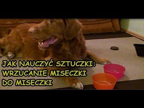 Jak nauczyć psa sztuczki z wrzucaniem miseczki do miseczki