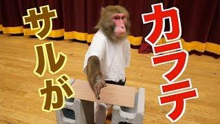 【さすが】ニホンザルに空手教えたらすごい技できた!!(#165)