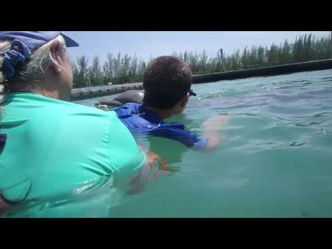 Dolphin Assisted Therapy - The Graham Fund, A Story of Hope and Healing