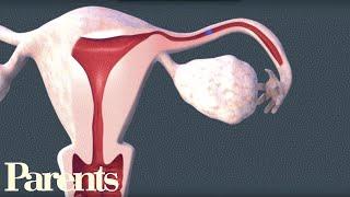 How Sperm Meets Egg   Parents