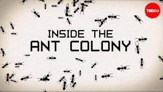 Inside the ant colony - Deborah M. Gordon