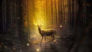 Relaxing Forest Music: Soothing Harp Music for Sleep and Relaxation ★13