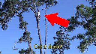 Tree Cut Down With Tree Hugger In It!! (skit/stunt)
