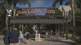 KTVU Zip Trips: The Oakland Zoo