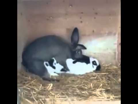 Rabbit Love =)