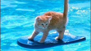 kids vs animals 1% Chance That These Animals Won't Make You Laugh! - Funny Animals In Pools Videos