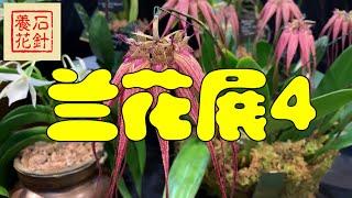 多伦多兰花展 Soos Orchids Show 2019 - 幻灯播放4