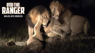 Disturbing Footage Of Lions Fighting To The Death (Not For Sensitive Viewers) (4K Video)