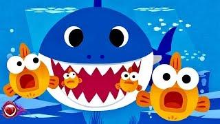 Baby Shark Cumbia Pop Corrido Baby Shark Dance Kids Baby Shark Disco  Baby Shark banda