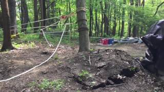 Uprooting a tree using a 45 to 1 pulley system