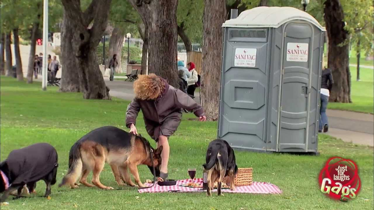 Dogs Eat Picnic Prank - YouTube