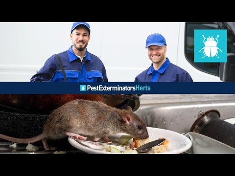 Experienced Pest Control Treatments In The County Of Hertfordshire Offering Emergency Service
