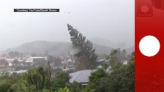 Caught on camera: Strong winds uproot giant tree in New Zealand