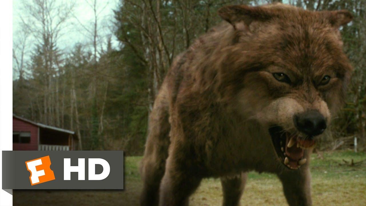 jacob black werewolf transformation - photo #13