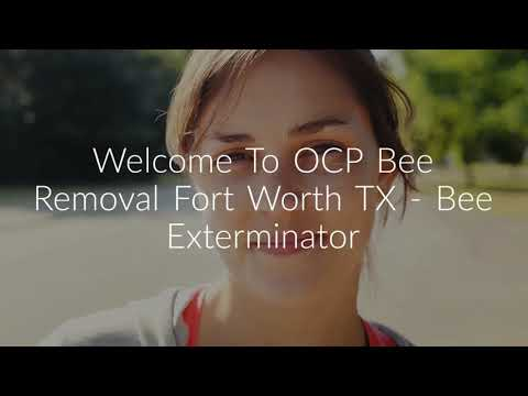 OCP Bee Removal in Fort Worth, TX