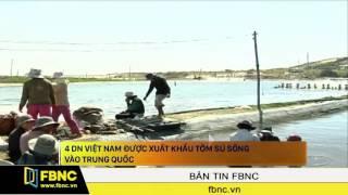 4 DN Việt Nam được xuất khẩu tôm sú sống vào Trung Quốc