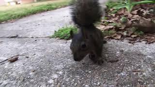 Real Squirrel Attack!!!