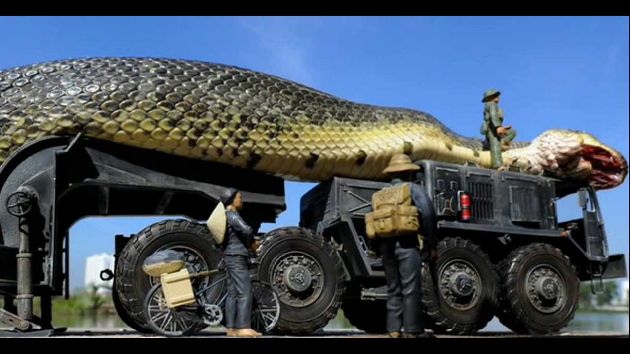 Amazing Giant Snake Found and Captured in The Red Sea #1 ... - photo#3