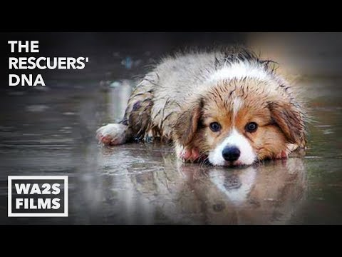 WET PUPPY RESCUED FROM FLOOD by Forgotten Dogs! The Rescuers DNA - Hope For Dogs | My DoDo