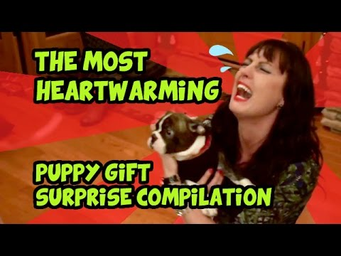 THE MOST HEARTWARMING PUPPY GIFT SURPRISE COMPILATION