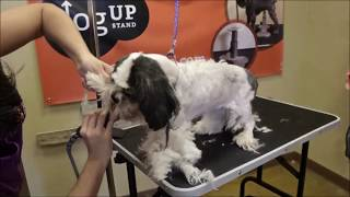 Grooming a matted dog live