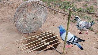 Creative Unique Parrot Bird Trap Using Dead fall Trap Made