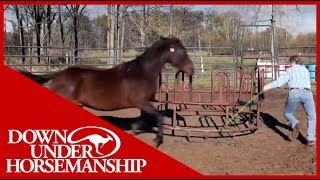 Clinton Anderson Presents Running Scared: Training An Aggressive Horse