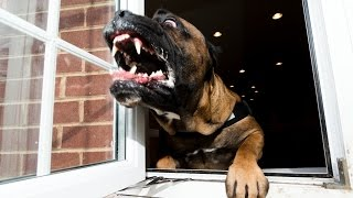 World's Toughest Dogs? $40,000 Protection Canines
