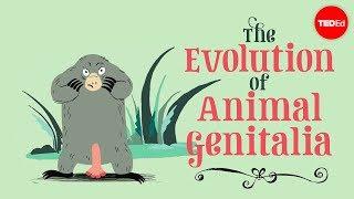 The evolution of animal genitalia - Menno Schilthuizen