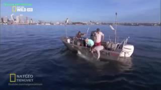 Cá mập tấn công