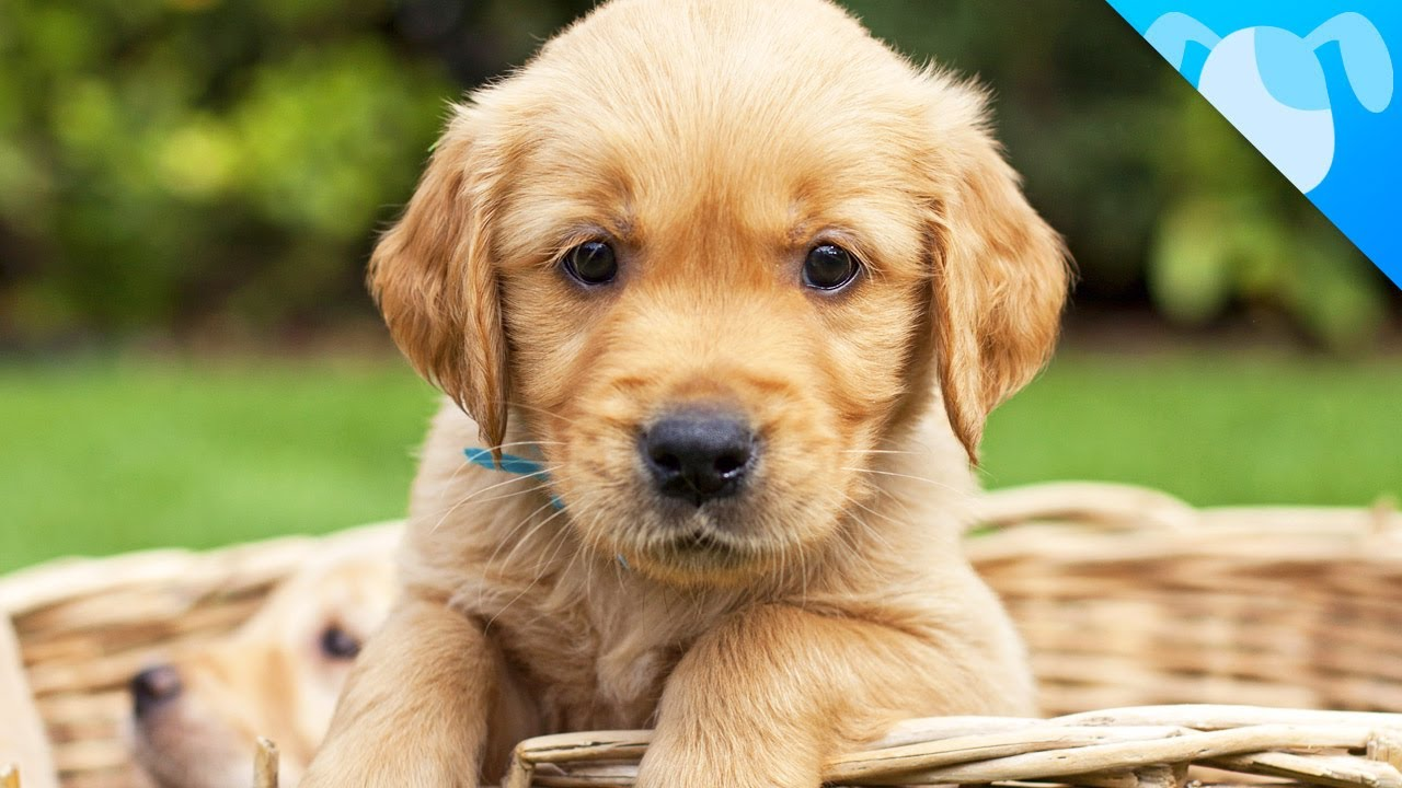 The Five Best Small Dog Breeds for Families With Young ... |The Best Pet Dogs