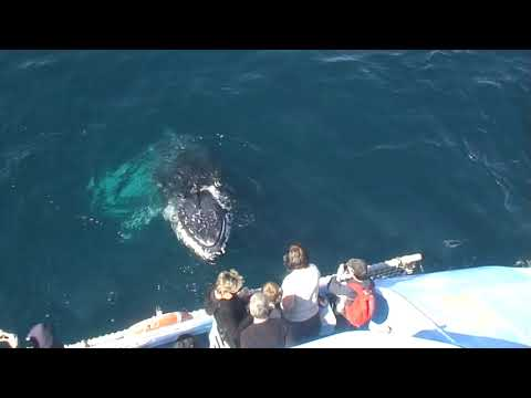 video Gold Coast Whale Watching Cruise