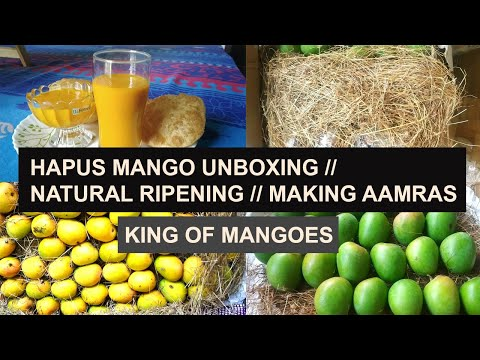 Real Alphonso Mango Unboxing | Mango Natural Ripening Process | How to Make Aamras | Devgad Mangoes