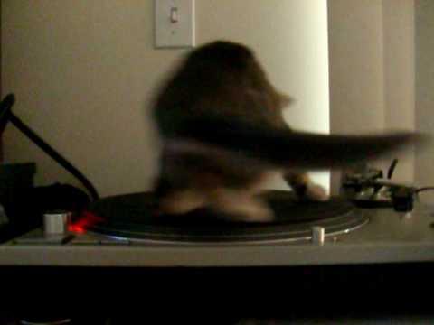 Мачка на грамафон