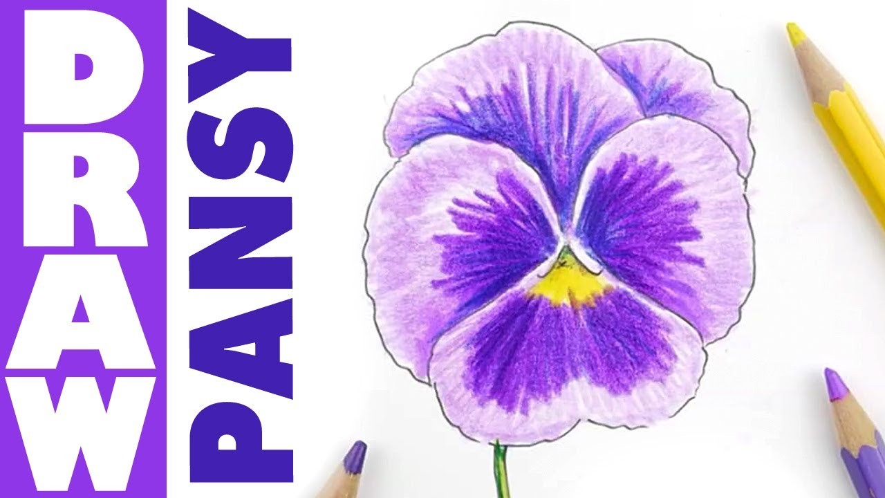 pansy flower drawing - photo #14