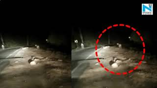 Man's close encounter with tiger caught on camera..