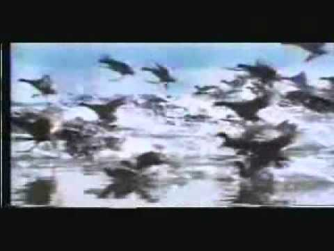 The Collapse of Evolution - Part 2 of 5 (Malayalam Islamic Documentary Film)