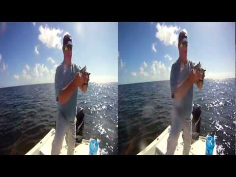 3D Florida Fishing Trip