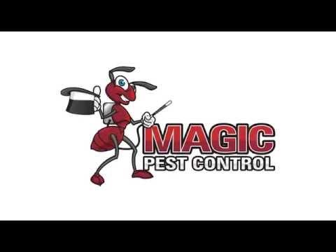 Termite Control Phoenix   Magic Pest Control