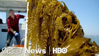 Kelp Could Save Our Oceans — If You Eat It (HBO)