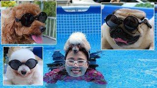 Cuộc Thi Bơi Giữa 3 Bạn Cún - Lần Đầu Thồn Bồn Chồn Được Tập Bơi