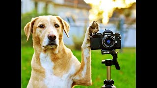 Awesome and Funniest Animals compilation 2019 😁🐶😻