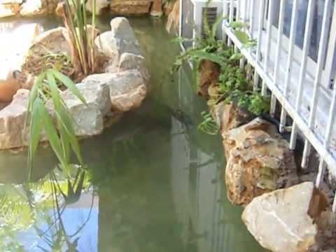 Como Construir Un Estanque Para Tortugas - Como-construir-un-estanque-para-tortugas
