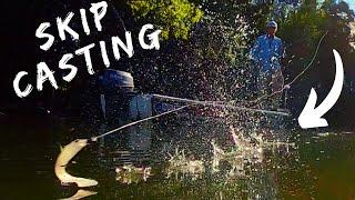 SKIP CASTING NEW MOLIX RT SHAD for Mangrove Jack