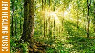 Nhạc thư giãn trị liệu - Nhạc nhẹ nhàng với tiếng suối chảy róc rách trong rừng xanh giúp thư thái