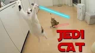 Ultimate Compilation Cat Jedi - 2016