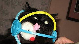 FUNNY BLACK CAT COMPILATION - (PREPARE to LAUGH)