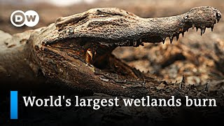 Blazes devastate huge parts of Brazil's Pantanal wetlands   DW News