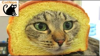 100 Hilarious Cats! | CatNips