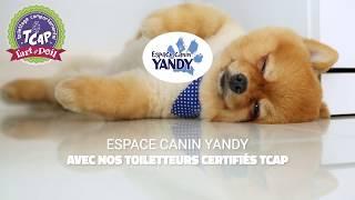 Programme chiots toilettage comportemental TCAP à Espace Canin Yandy
